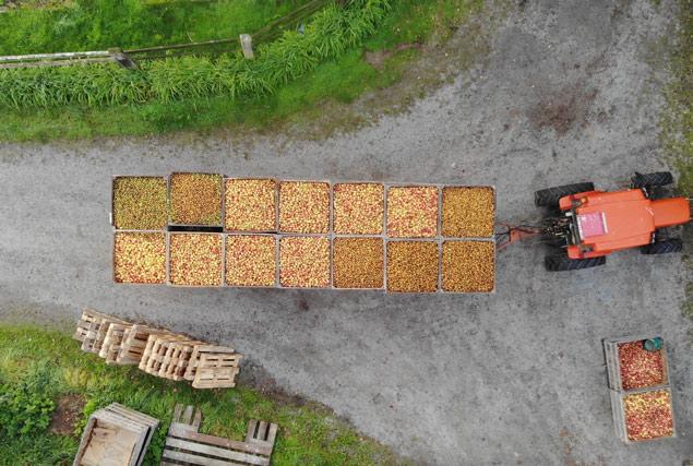 Récolte des pommes au domaine
